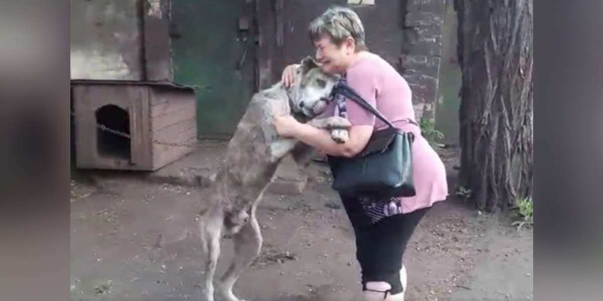 Dog Lost For Years Is So Happy To Be In His Best Friend's Arms Again
