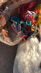 Penguin who died because of loose balloons