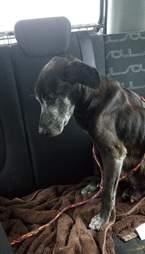 Shelter dog on freedom ride