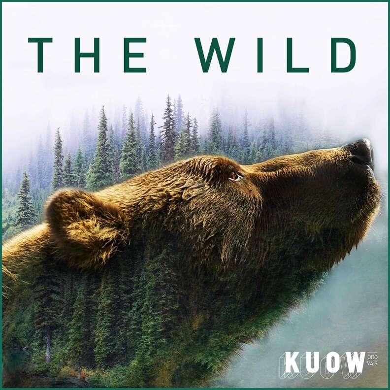 the wild podcast