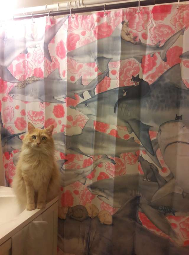 Stop Destroying Shower Curtains