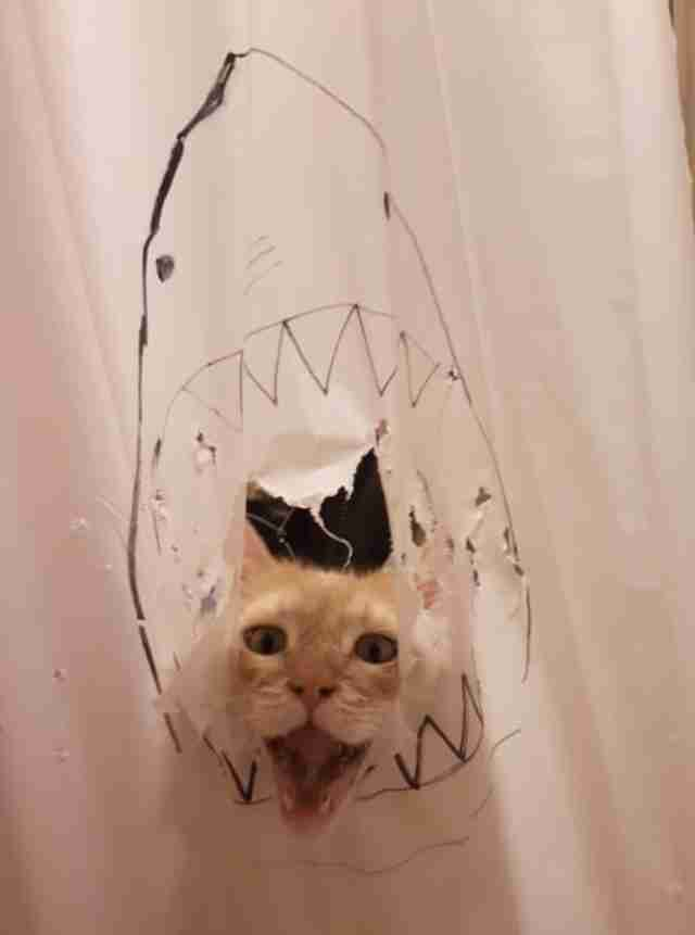 shower curtain cat