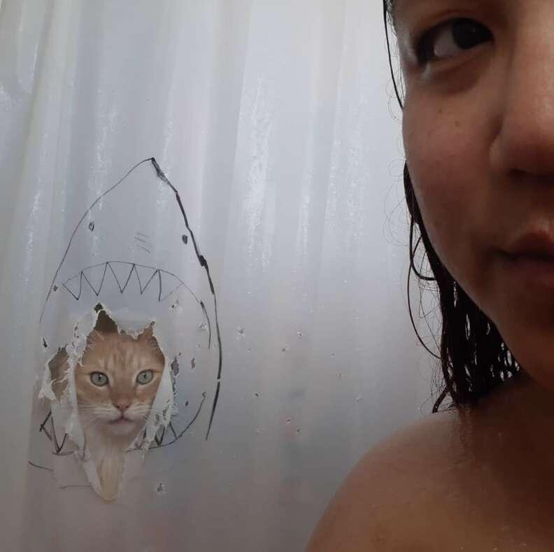 shower curtain cat