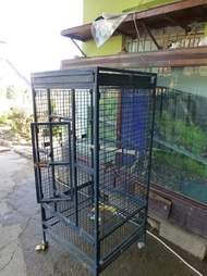 Cage where zoo chimp lived in Iraq before rescue