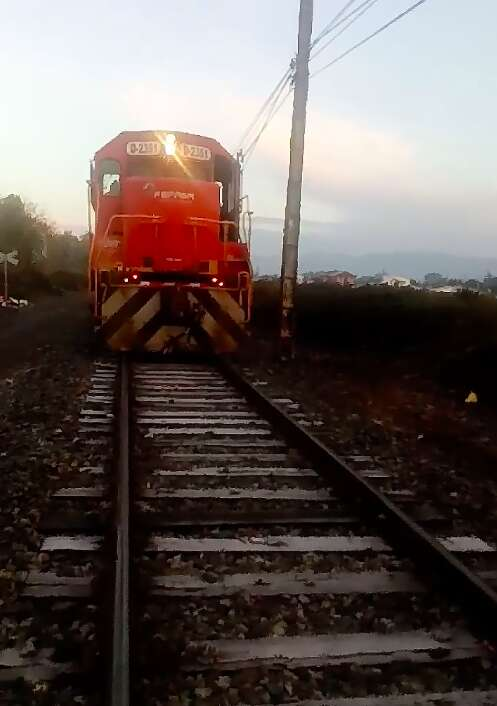 Train driver spots dog chained to tracks in Chile