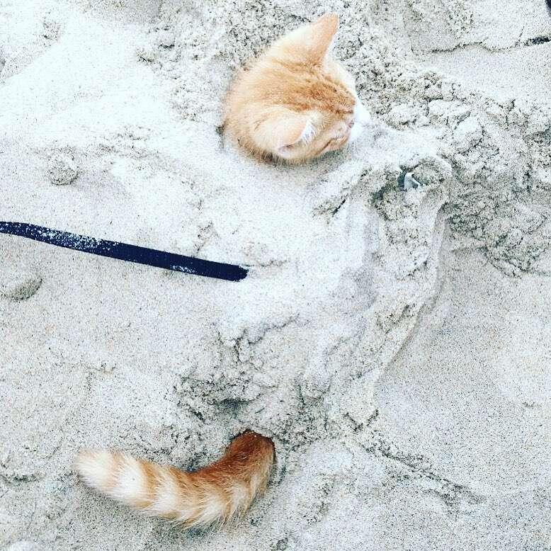 beach cat pip