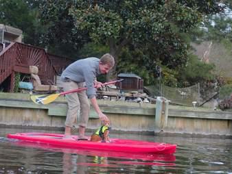 pip the beach cat paddleboarding