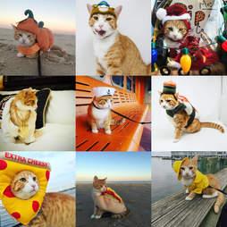 pip the beach cat