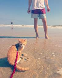 pip the beach cat ocean city md