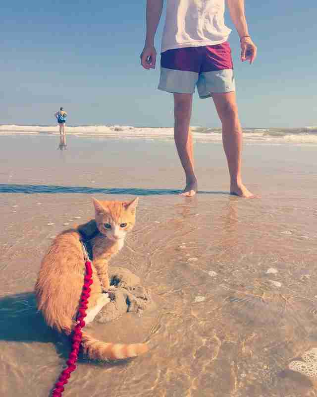 Story Behind Pip The Beach Cat