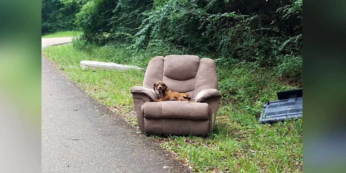 Puppy Dumped With Chair And TV Thought His Owner Would Come Back For Him