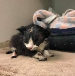 kitten covered in tar