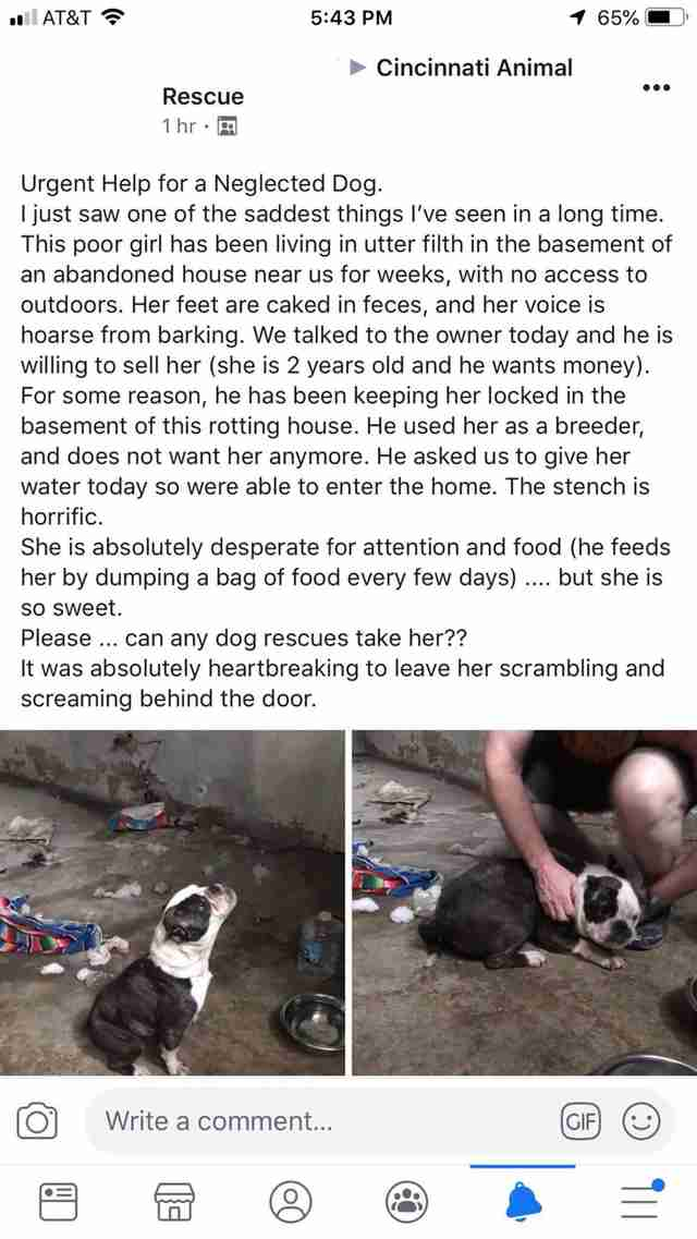 A Facebook post asking for help with a neglected bulldog