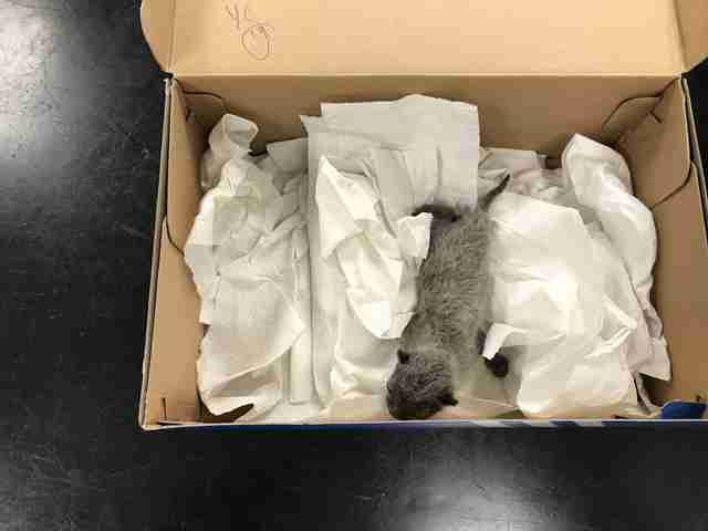 Person Opens Shoebox And Finds The Tiniest Little Baby