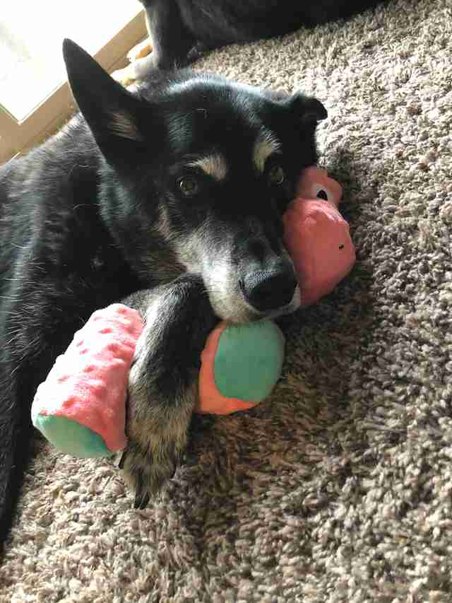 Dog falls in love with toy