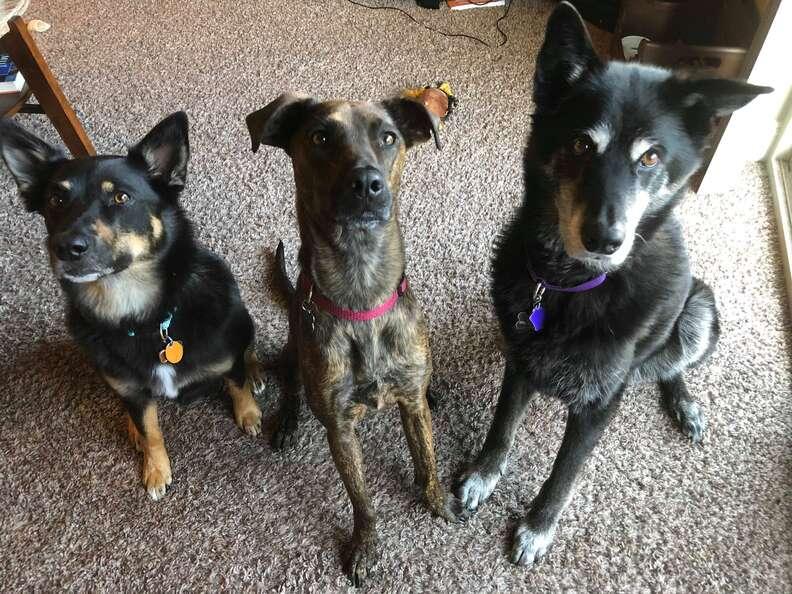 Kairi with her new dog siblings