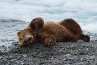 Bear in Bristol Bay, Alaska