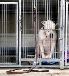 sad shelter dog
