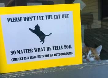sign cat