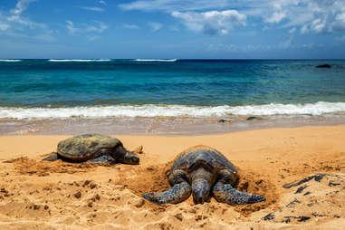 sea turtles along the shore