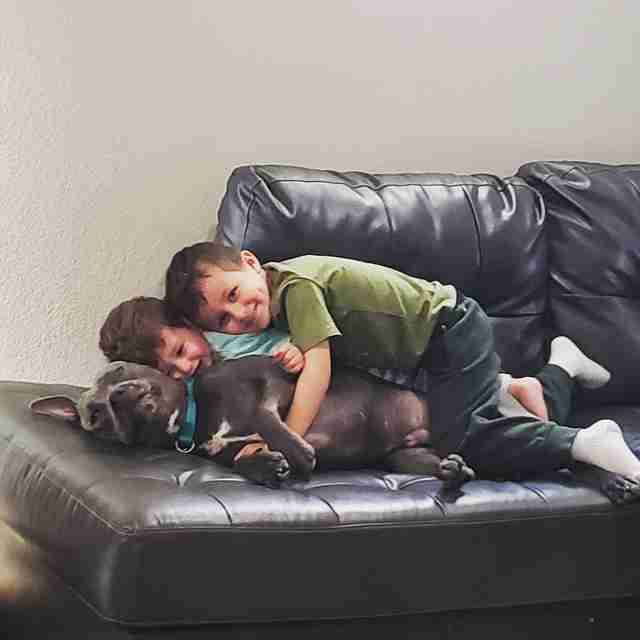 Pit Bull Sees Mom Trying To Take A Cute Picture And Decides To Ruin It