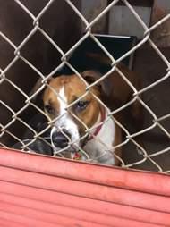 chubbs shelter dog austin pets alive