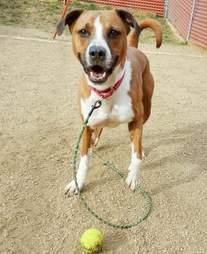 austin pets alive chubbs dog
