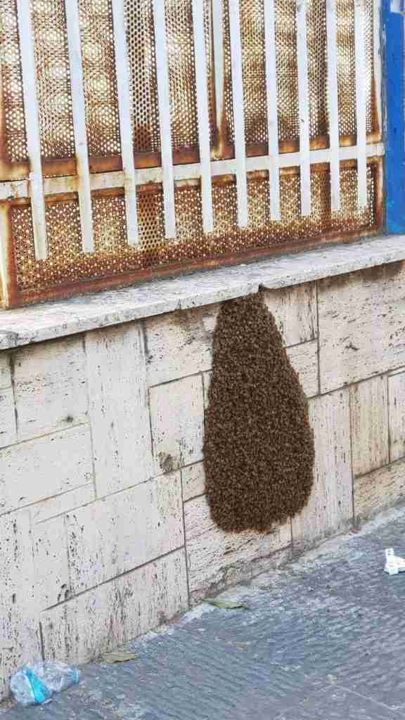 Beehive treated hospitably by Neapolitans