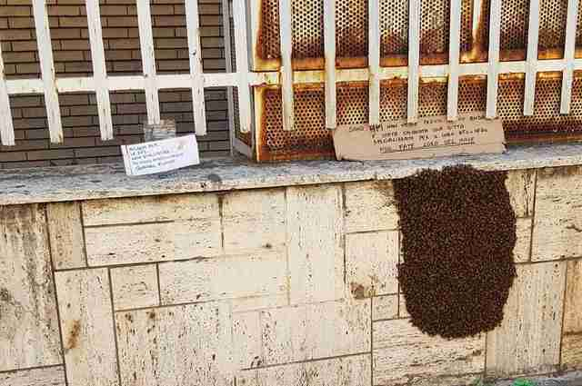 Beehive treated with kindness in Southern Italy