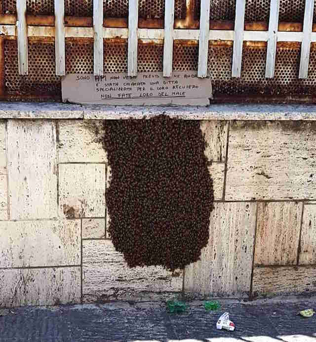 Beehive treated with kindness outside of Naples, Italy