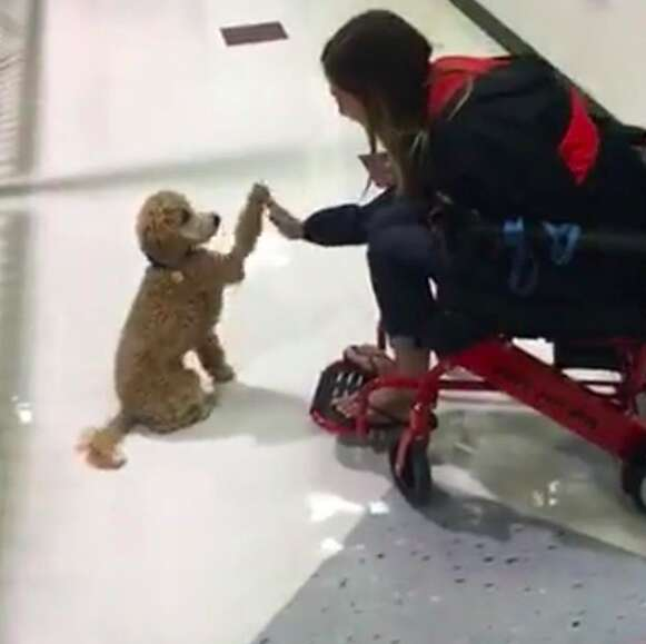 Moxie the service dog gives her mom a highfive