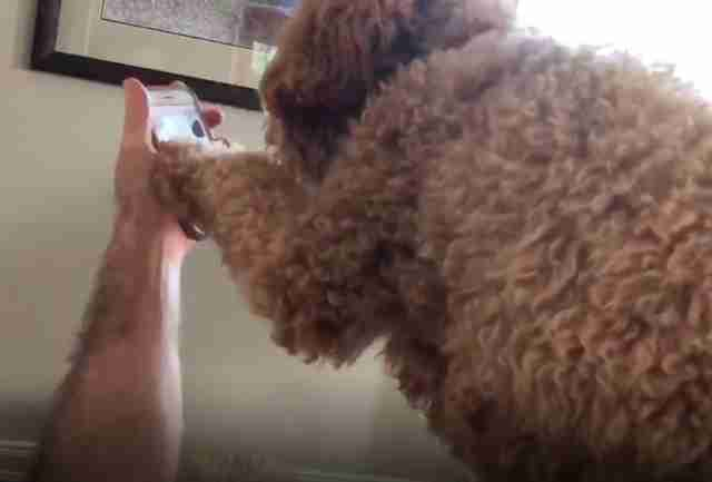 Moxie the dog FaceTimes with her mom