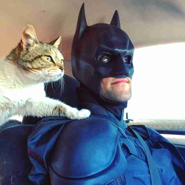 Batman transports homeless animals