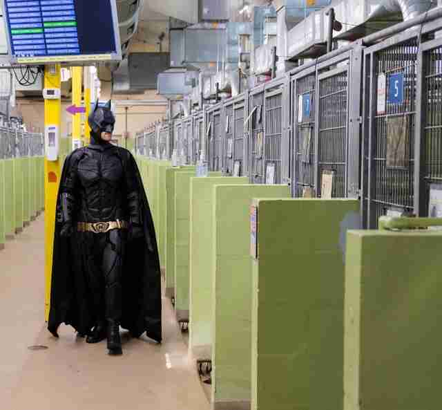 Batman visits the dog shelter