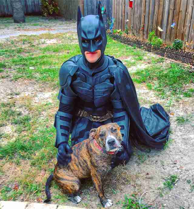 Batman rescues pitbull and drives her to her forever home