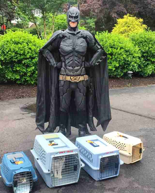Batman transports shelter dogs to their homes