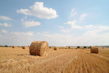 bales of hay for straws