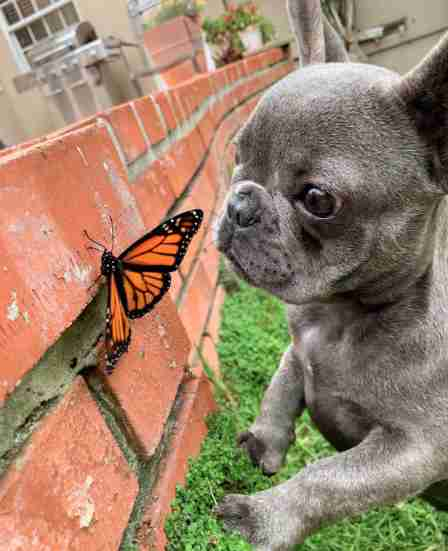 This Little Dog Befriended A Butterfly, And For A Moment The World Was Perfect