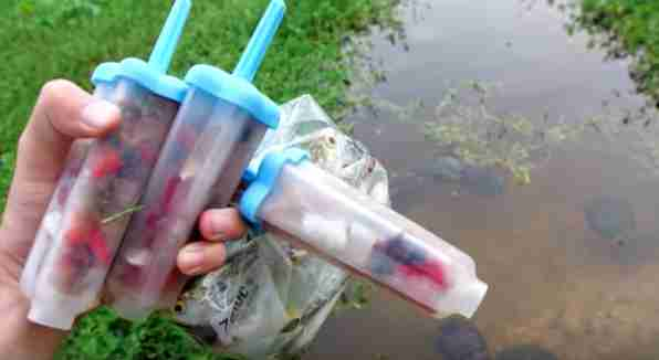 Guy gives local turtles popsicles for the Fourth of July
