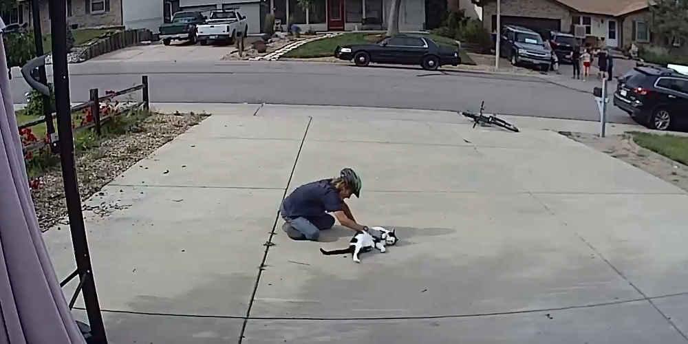 Boy Caught Paying The Sweetest Visit To Neighbor's 'Misunderstood' Cat