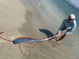 Fishermen find oarfish on Mexico beach
