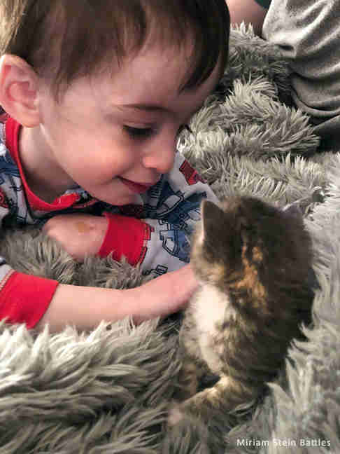 Little boy with foster kitten