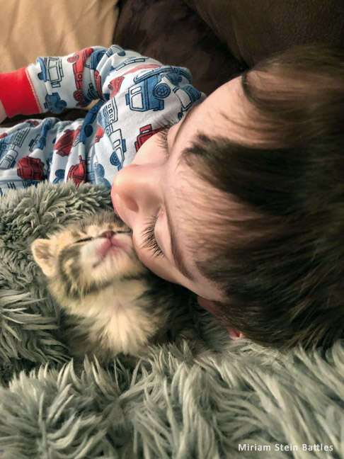 Foster kitten snuggling with toddler