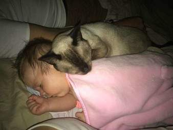 This formerly stray Siamese fell completely in love with her new family's newborn baby.