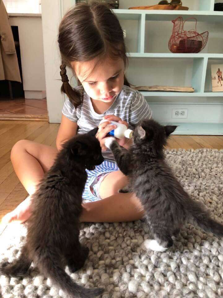 Another toddler learning how to bottle-feed foster kittens from WOTNVR