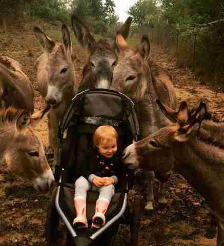 Rescued donkeys bonding with little girl