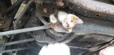 kitten stuck under car