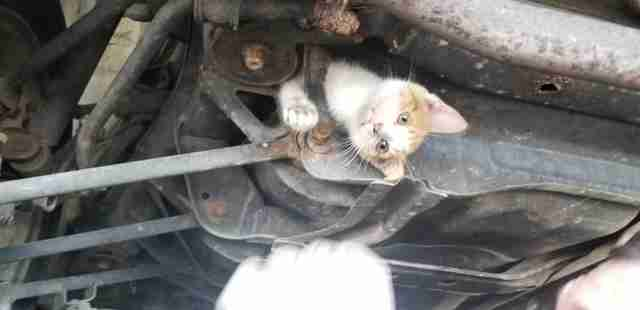 kitten stuck under car