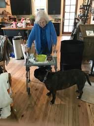 pit bull protects grandma