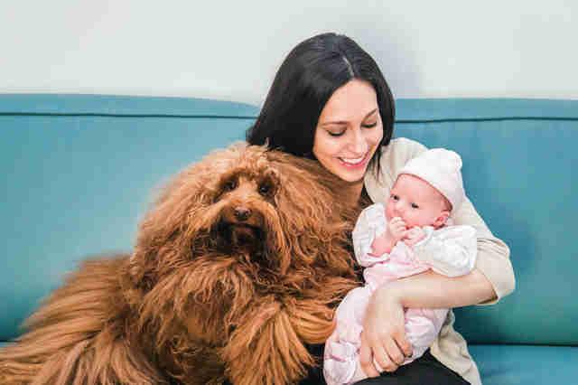 Ils voient leur chien entrer dans la chambre de leur bébé : ce que fait le toutou les marque pour toujours